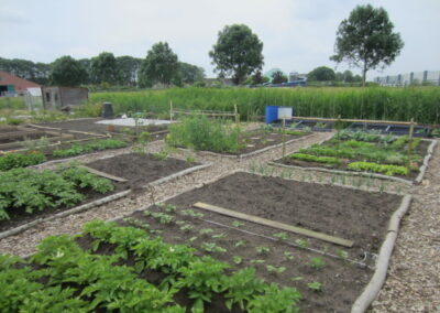 project taal in de tuin transition town vollenhove